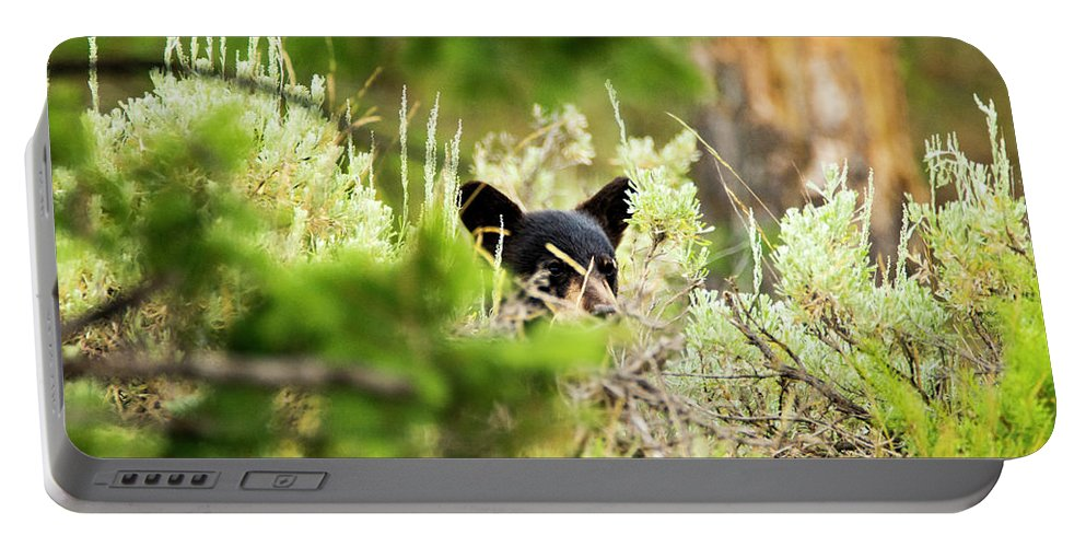Portable Battery Charger featuring the photograph Black Bear Cub by Sheryl Saxton
