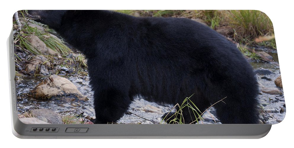 Black Bear Portable Battery Charger featuring the photograph Black Bear by Neal Lacroix