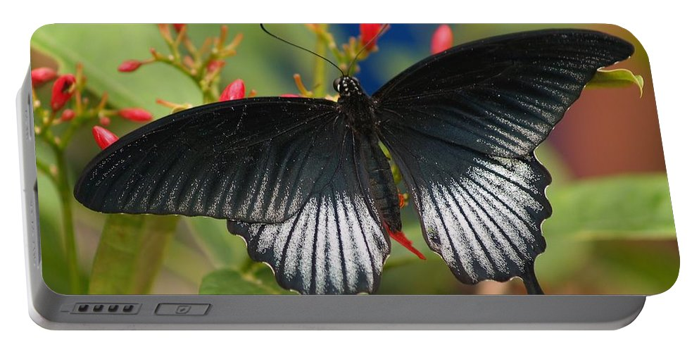 Butterfly Portable Battery Charger featuring the photograph Black Beauty by Gaby Swanson