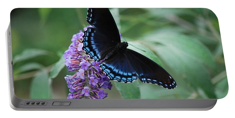 Butterfly Portable Battery Charger featuring the photograph Black Beauty by Lori Tambakis