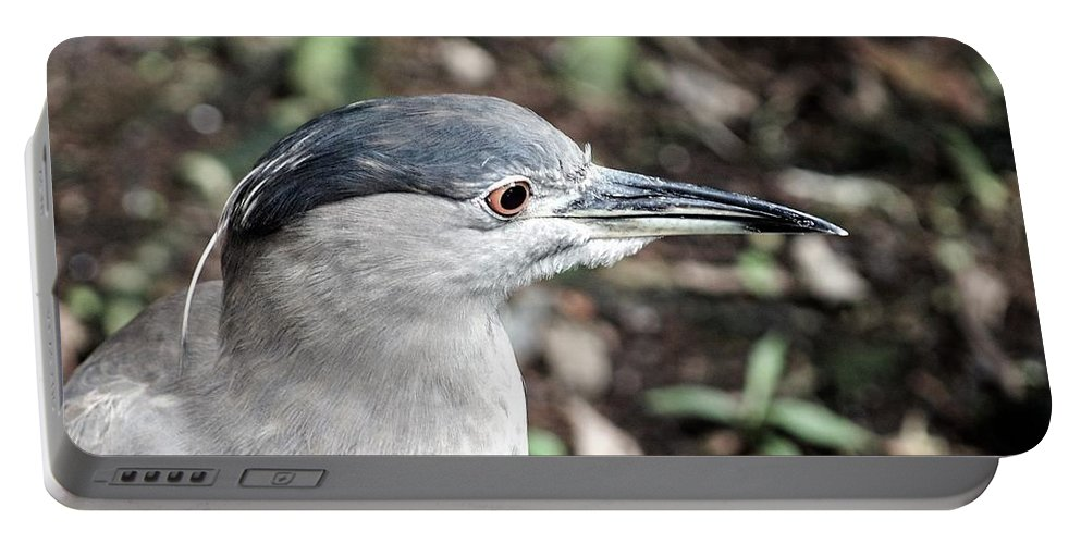Heron Portable Battery Charger featuring the photograph Black-crowned Night Heron by Fred Rosenthal