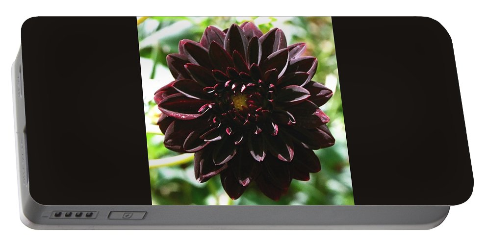 Flower Portable Battery Charger featuring the photograph Black Dalia by Dean Triolo