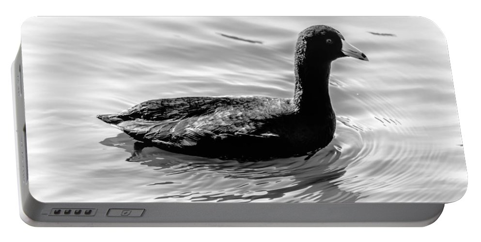 Duck Portable Battery Charger featuring the photograph Black Duck by Leticia Latocki