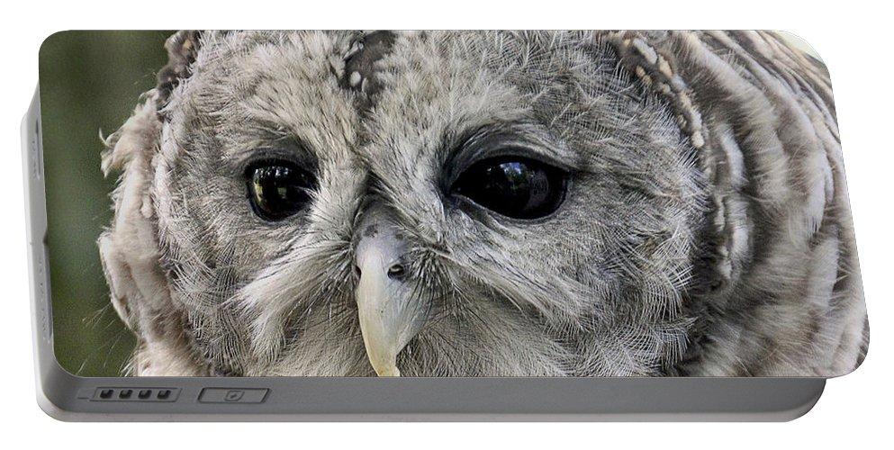 Beak Portable Battery Charger featuring the photograph Black Eye Owl by Bob Slitzan