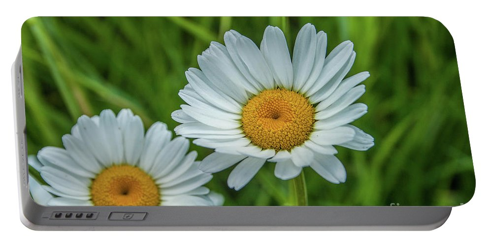 Flower Portable Battery Charger featuring the photograph Black-headed Daisy's by Tony Baca