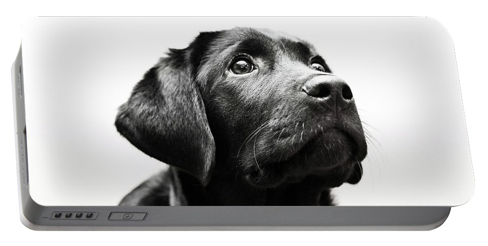 Dog Portable Battery Charger featuring the photograph Black Labrador Retriever Potrait by Mike Trueman