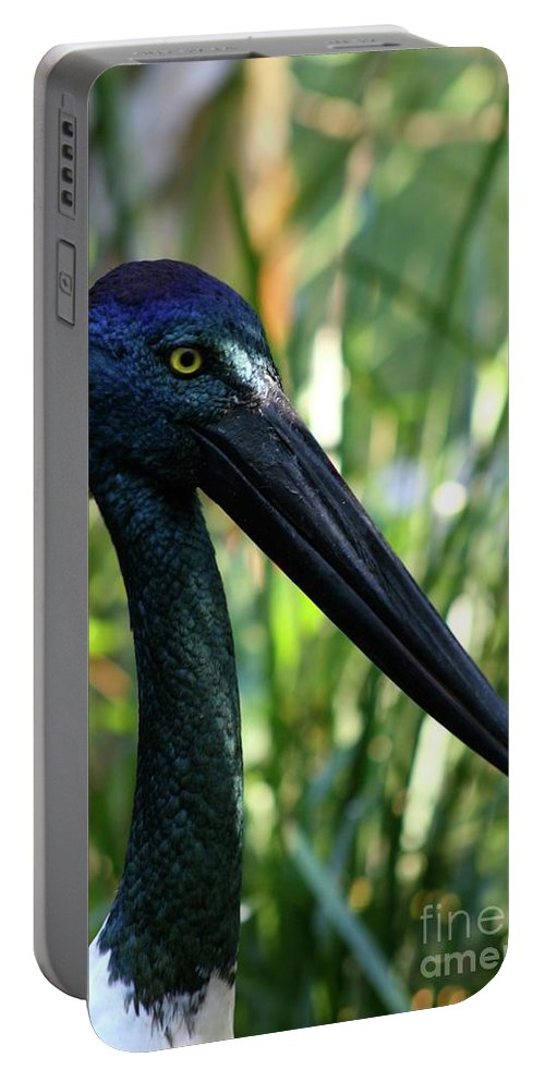 Black Necked Stork Portable Battery Charger featuring the photograph Black Necked Stork 1 by Gregory E Dean