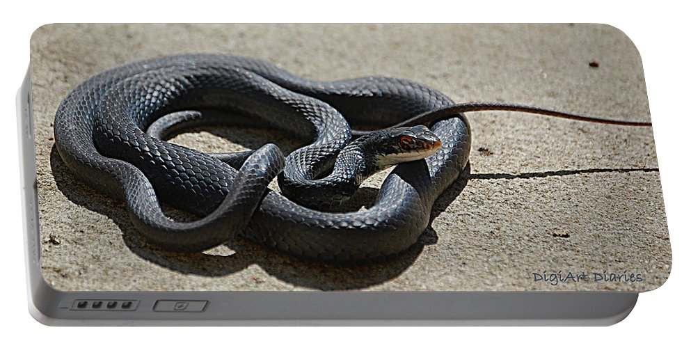 Snake Portable Battery Charger featuring the digital art Black Racer by DigiArt Diaries by Vicky B Fuller