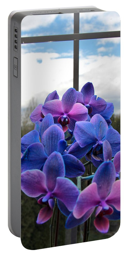 Orchids Portable Battery Charger featuring the photograph Black Sapphire Orchids by Aaron Berg