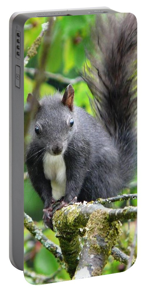 Animal Portable Battery Charger featuring the photograph Black Squirrel In The Cherry Tree by Valerie Ornstein