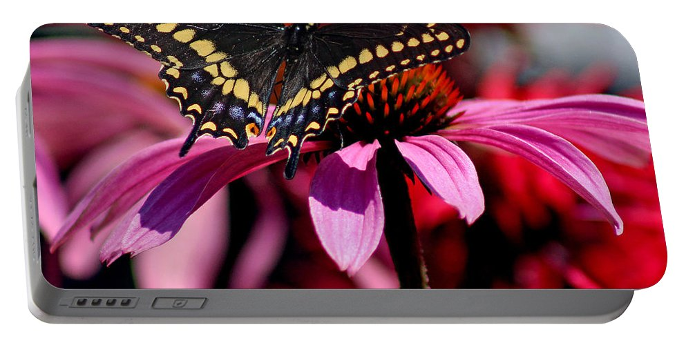 Insect Portable Battery Charger featuring the photograph Black Swallowtail Butterfly On Coneflower Square by Karen Adams