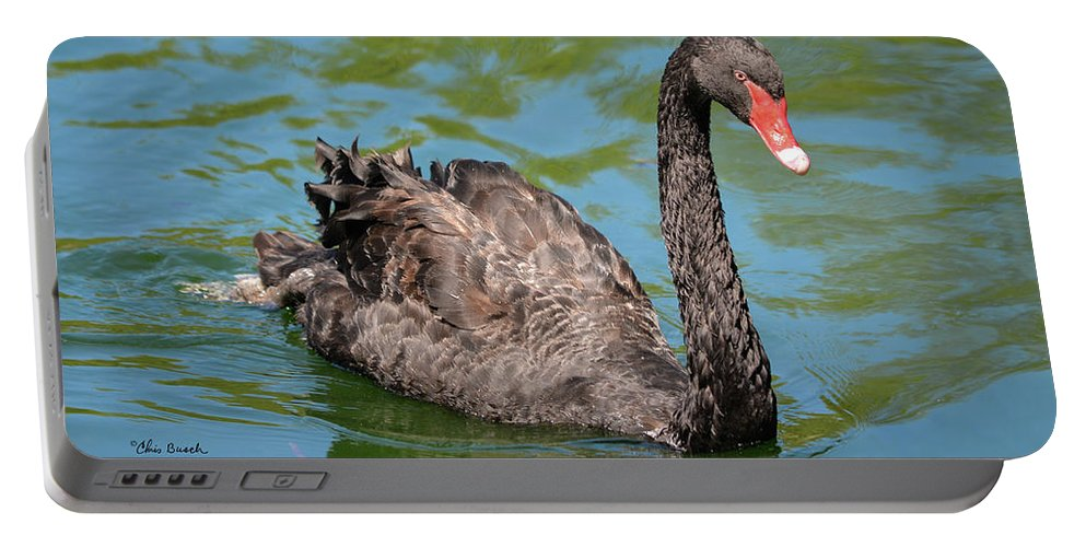 Swan Portable Battery Charger featuring the photograph Black Swan by Chris Busch