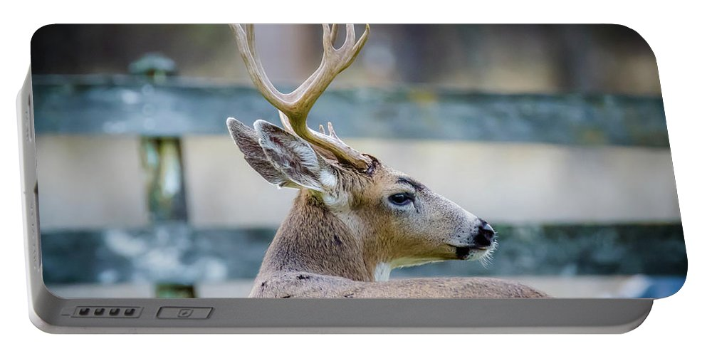 Deer Portable Battery Charger featuring the photograph Black-tailed Buck by Alan C Wade
