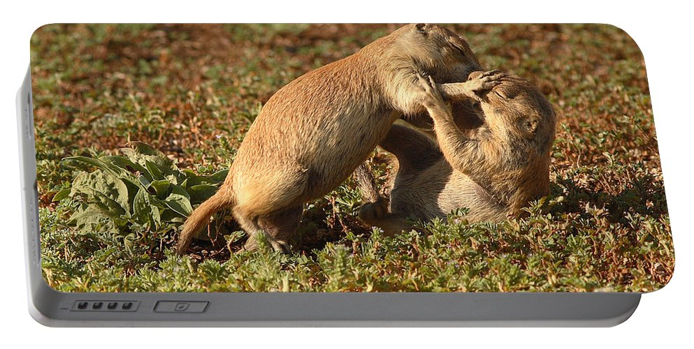 Prairie Dog Portable Battery Charger featuring the photograph Black-tailed Prairie Dogs Wrestling Around by Max Allen