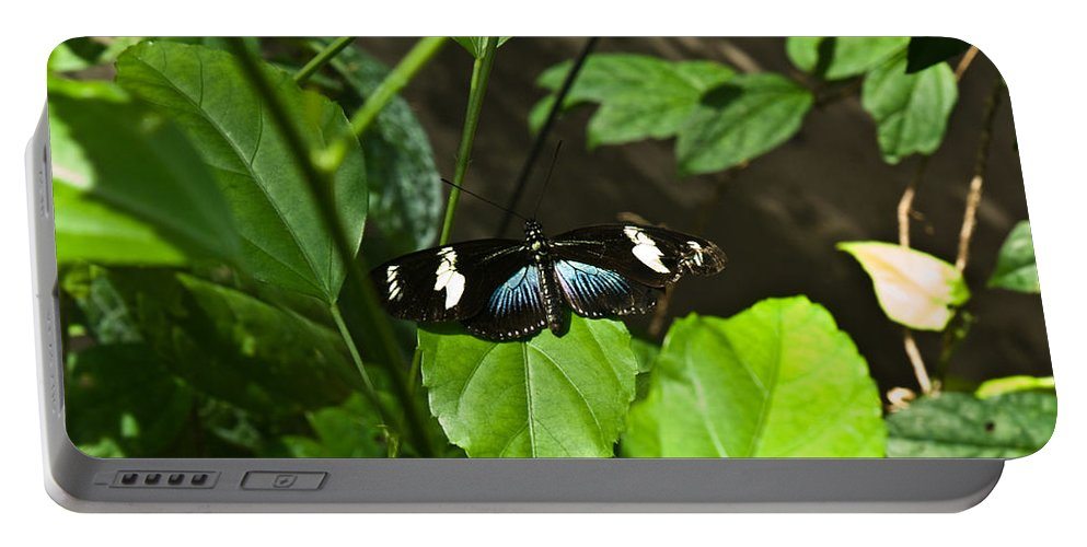 Black Portable Battery Charger featuring the photograph Black Tropical Butterfly by Douglas Barnett