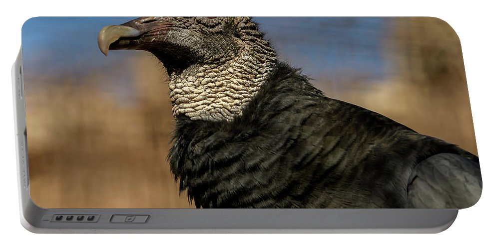 Black Vulture Portable Battery Charger featuring the photograph Black Vulture 1 by David Pine