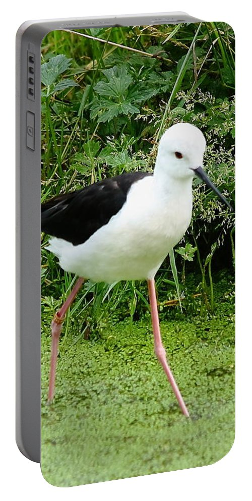 Black-winged Portable Battery Charger featuring the photograph Black-winged Stilt by Jeff Townsend