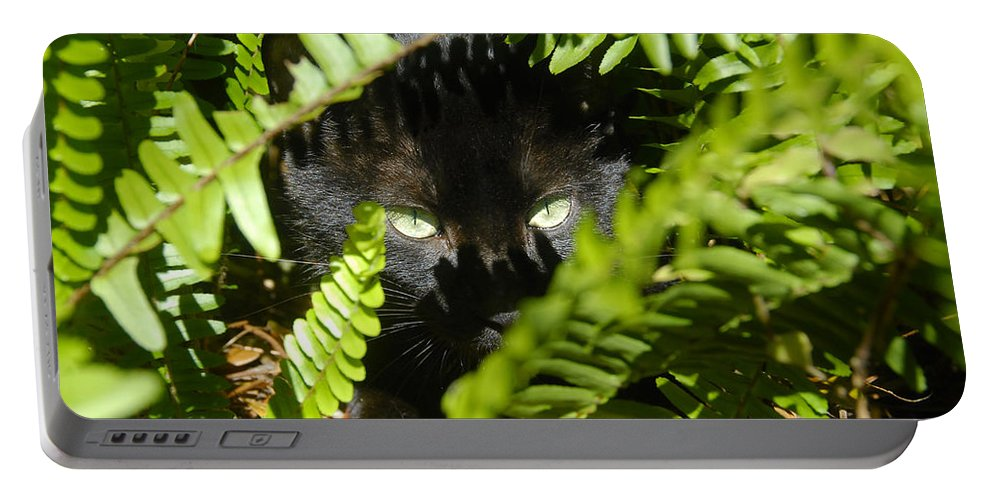 Cat Portable Battery Charger featuring the photograph Blackie In The Ferns by David Lee Thompson