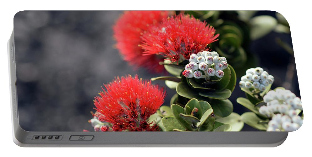 Island Portable Battery Charger featuring the photograph Blazing Blooms Of Ohia Flowers by Mihaela Nica