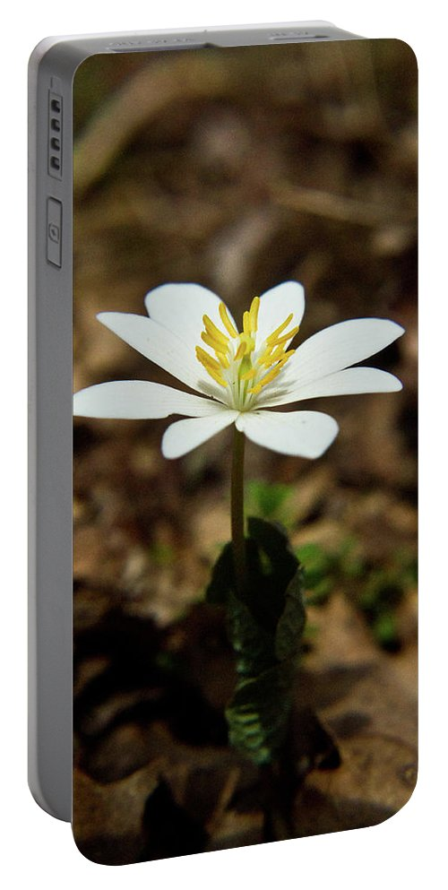 Sanguinaria Portable Battery Charger featuring the photograph Bloodroot by Douglas Barnett