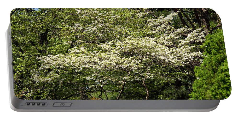 Hagerstown Maryland Dogwood Tree Trees Bloom Blooms Nature City Park Parks Portable Battery Charger featuring the photograph Blooming Dogwood by Bob Phillips