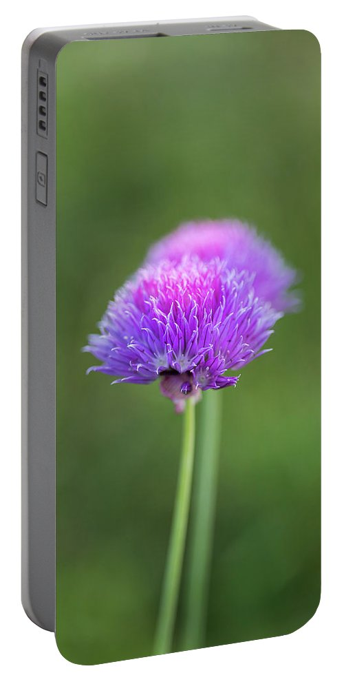 Blooming Onion Chives Portable Battery Charger featuring the photograph Blooming Onion Chives by Yana Reint