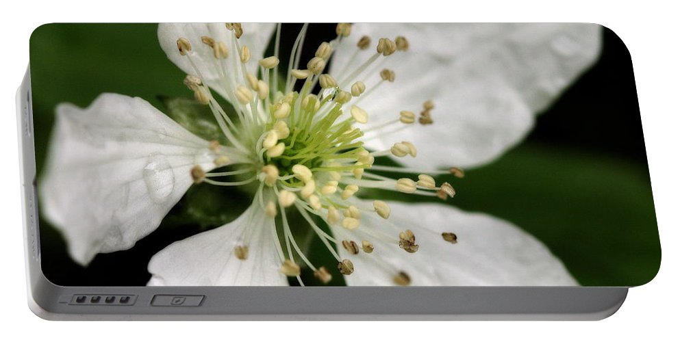 Flower Portable Battery Charger featuring the photograph Blossom Square by Angela Rath