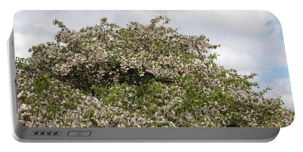 Tree Portable Battery Charger featuring the photograph Blossoming Tree by Michelle Miron-Rebbe