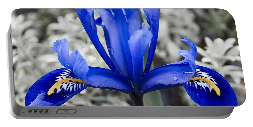 Blue Portable Battery Charger featuring the photograph Blue Along by Svetlana Sewell