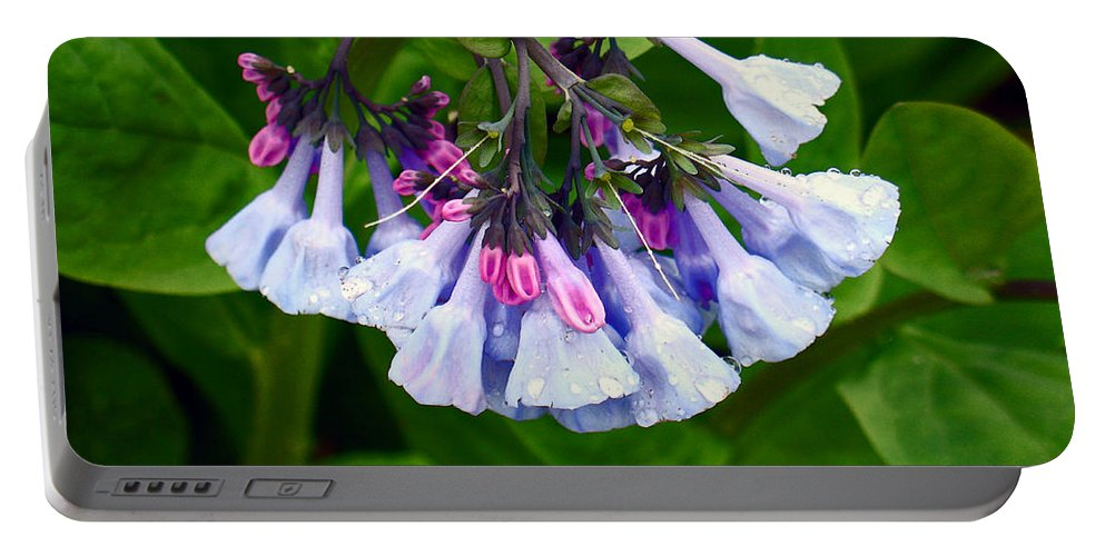 Native Landscape Portable Battery Charger featuring the photograph Blue Bells by Steve Karol