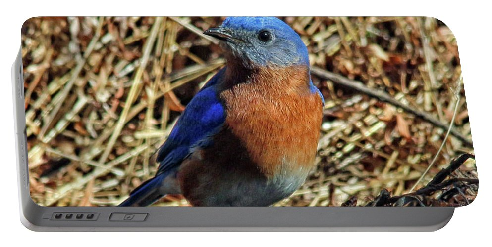 Blue Bird Portable Battery Charger featuring the photograph Blue Bird In The Grass by Jo Anne Keasler