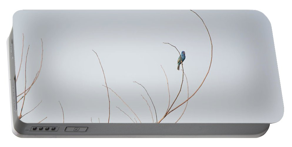 Blue Bunting Portable Battery Charger featuring the photograph Blue Bunting by Linda Kerkau