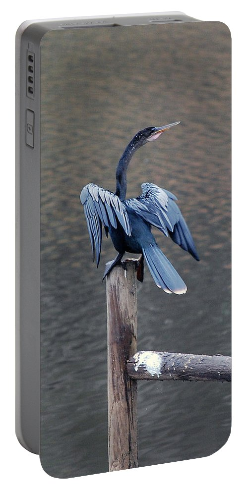 Bird Portable Battery Charger featuring the photograph Blue Darter by Robert Meanor