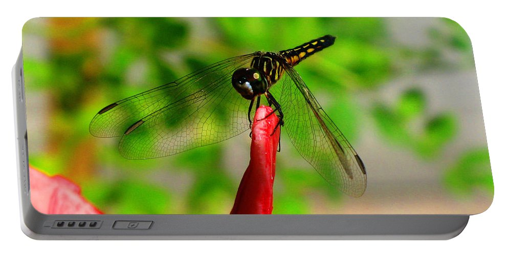 Damselfly Portable Battery Charger featuring the photograph Blue Dasher Damselfly by September Stone