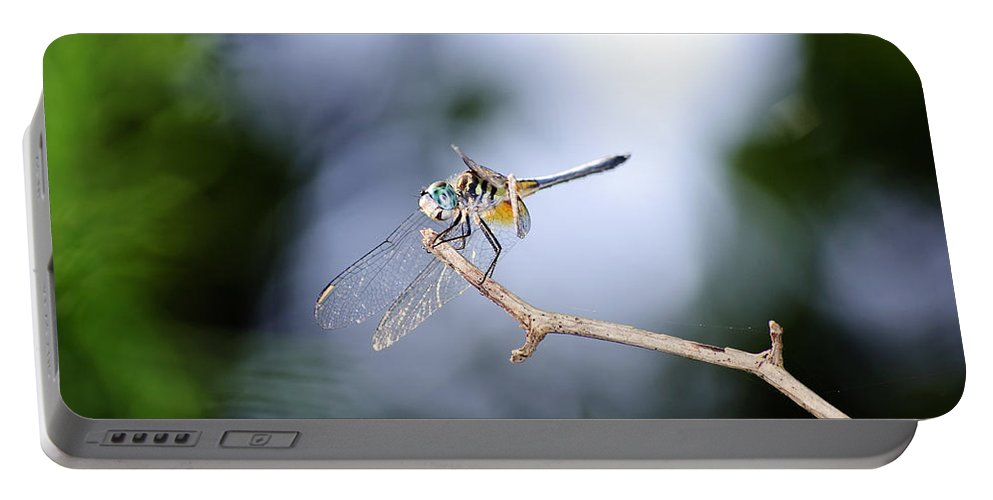 Dragonfly Portable Battery Charger featuring the photograph Blue Dasher Dragonfly by Kenneth Albin