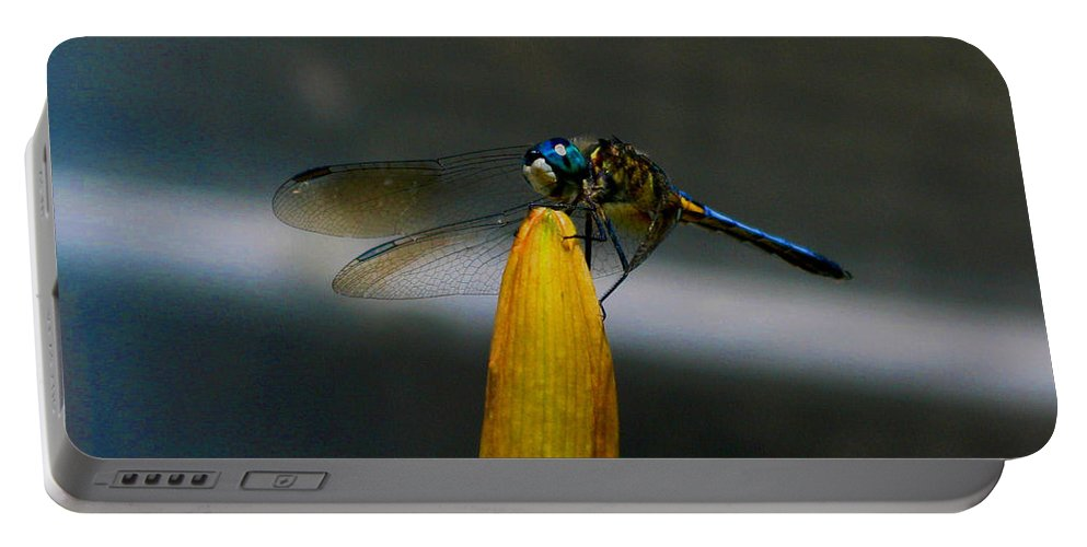 Dragonfly Portable Battery Charger featuring the photograph Blue Dhasher Dragonfly by September Stone