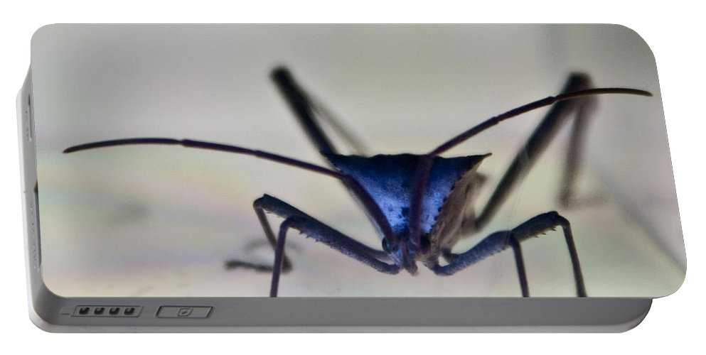 Hemiptera Portable Battery Charger featuring the photograph Blue-eyed Monster by Douglas Barnett