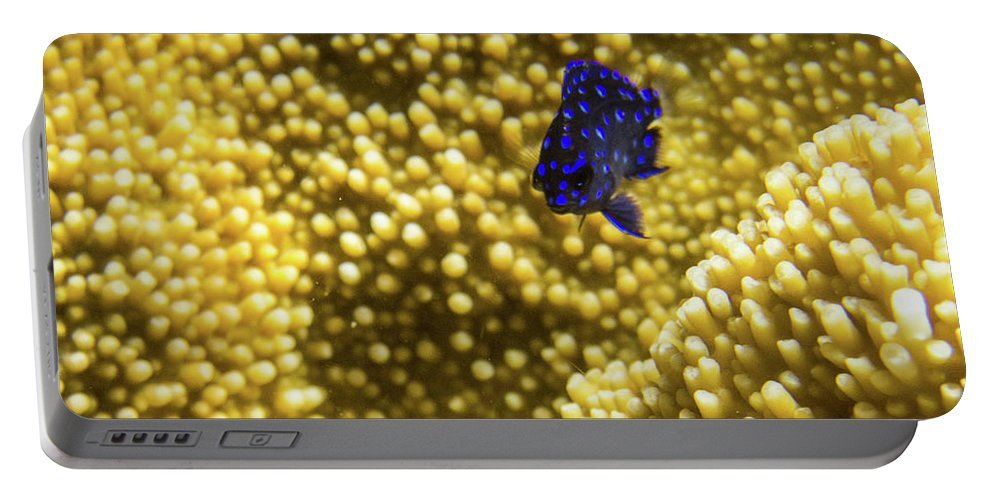 Underwater Portable Battery Charger featuring the photograph Blue Fish In Coral by Rob Lantz
