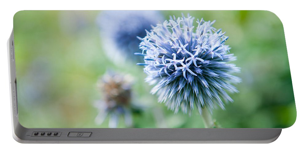 Helen Northcott Portable Battery Charger featuring the photograph Blue Globe Thistle Flower by Helen Northcott