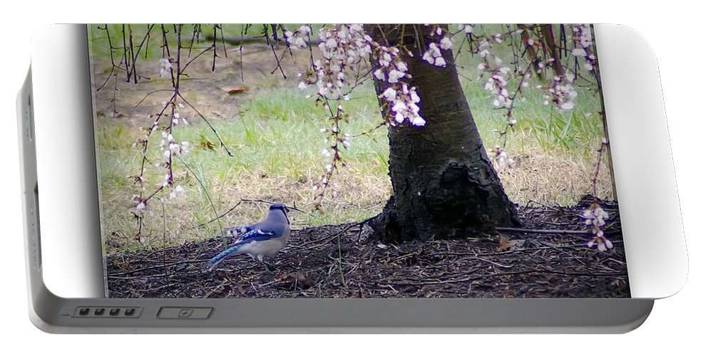 2d Portable Battery Charger featuring the photograph Blue Jay by Brian Wallace