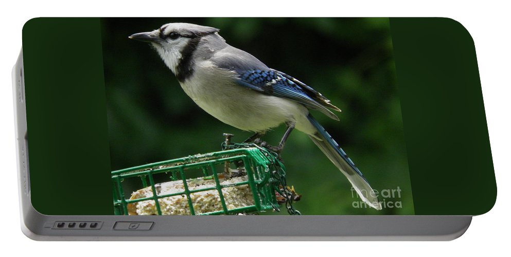 Blue Jay Day Portable Battery Charger featuring the photograph Blue Jay Day by Earl Williams Jr