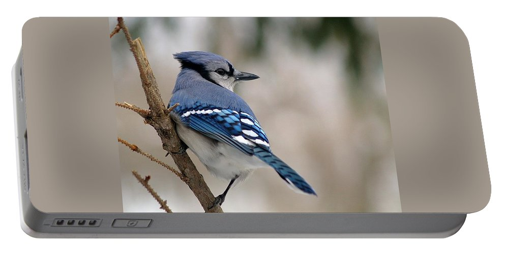 Blue Jay Portable Battery Charger featuring the photograph Blue Jay by Gaby Swanson