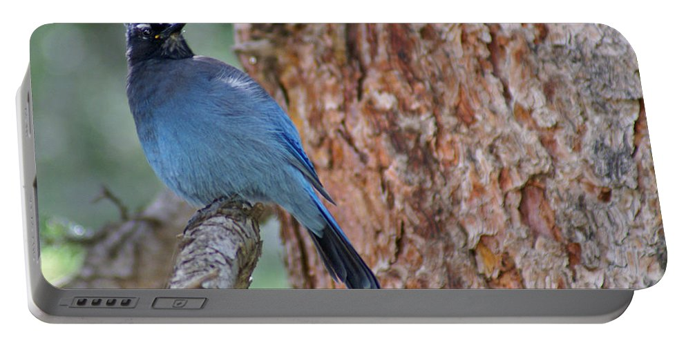 Blue Jay Portable Battery Charger featuring the photograph Blue Jay by Heather Coen