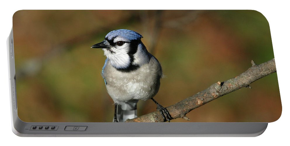 Blue Jay Portable Battery Charger featuring the photograph Blue Jay by Karol Livote