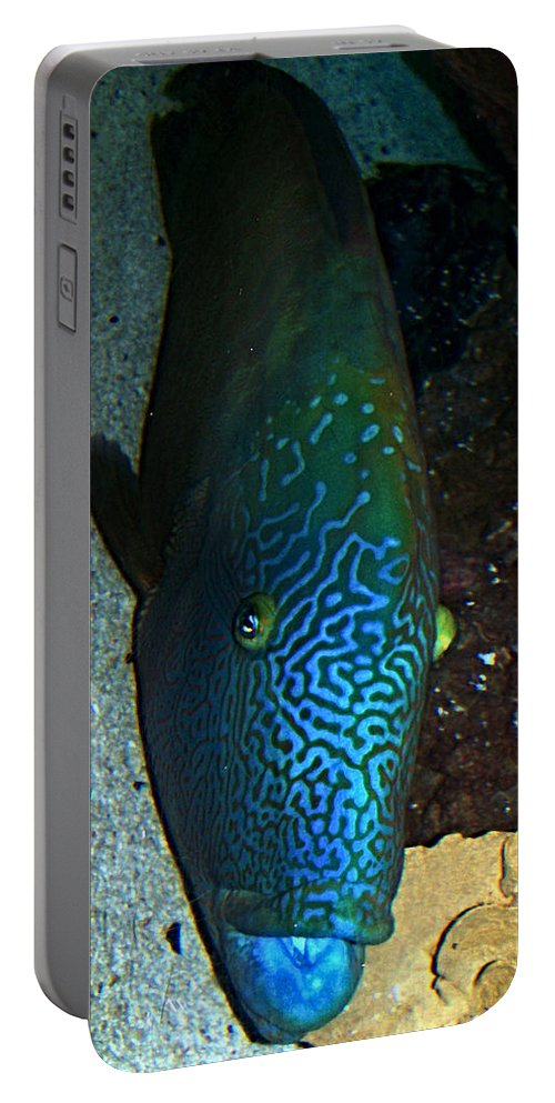 Fish Portable Battery Charger featuring the photograph Blue Parrot Fish by Anthony Jones