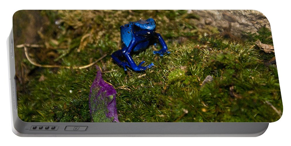 Blue Portable Battery Charger featuring the photograph Blue Poison Arrow Frog by Douglas Barnett