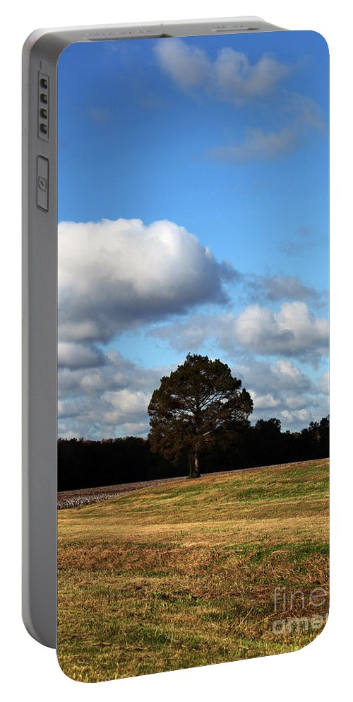 Trees Portable Battery Charger featuring the photograph Blue Skies by Amanda Barcon