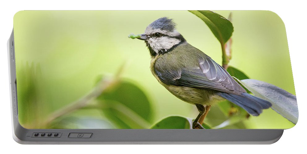 Blue Tit Portable Battery Charger featuring the photograph Blue Tit With Caterpillar by Alan Grant