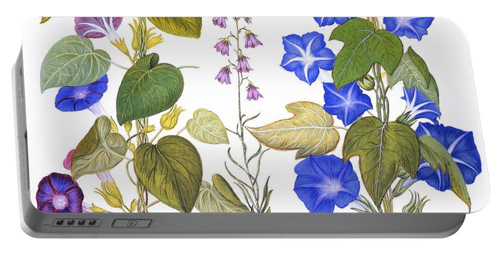 1613 Portable Battery Charger featuring the photograph Bluebell And Morning Glory by Granger