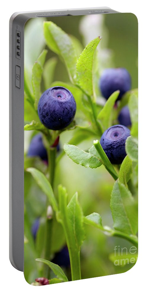 Blueberry Portable Battery Charger featuring the photograph Blueberry Shrubs by Michal Boubin